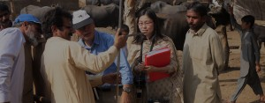 パキスタン:畜産技術の指導と普及